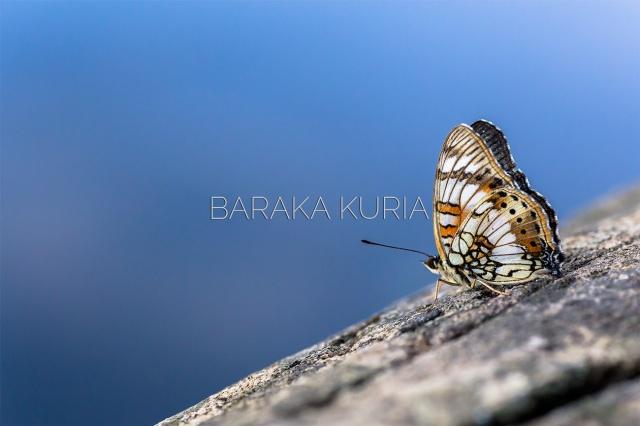 Baraka Kuria Photography